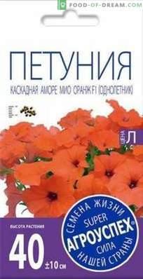 Panoramica di Amore Mio, una petunia a cascata di Agrousp, descrizione e raccomandazioni per ...