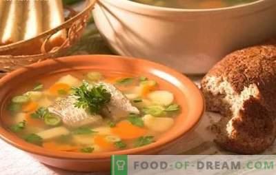 La zuppa di pesce persico è una deliziosa zuppa a casa. Come cucinare un orecchio da un trespolo: segreti, ricette, suggerimenti