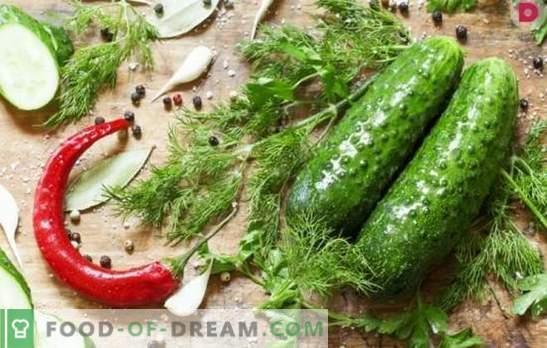 Quanto è gustoso produrre cetrioli salati? Varianti di cetrioli salati con corteccia di quercia, rafano, limone, menta, aceto e pane