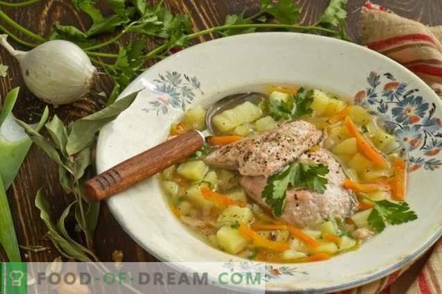 Zuppa di salmone di pesce