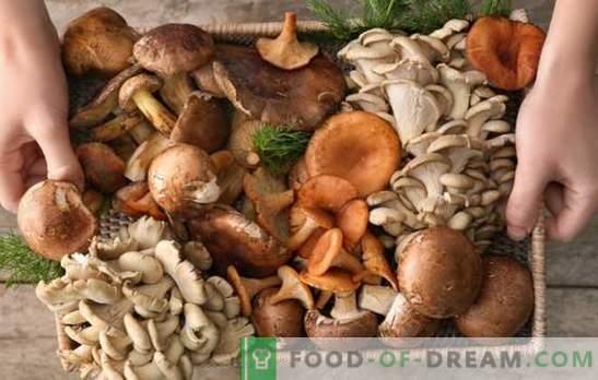Non ti piacciono i funghi? Non so come cucinarli! Errori che cucinano funghi