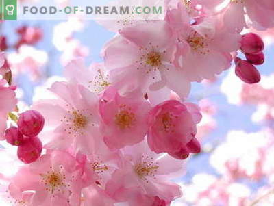 Confettura di Sakura: come cucinare