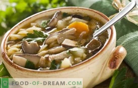 Zuppa di champignon ai funghi - facile e semplice! Ricette di zuppa di champignon ai funghi con pollo, grano saraceno, pasta e formaggio