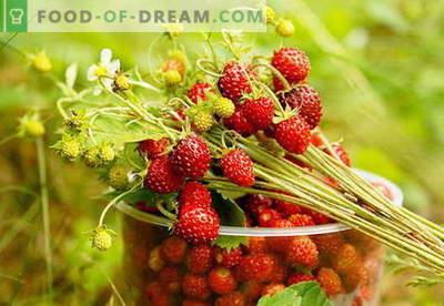 Maasika moos: kuidas maasika moosi õigesti valmistada
