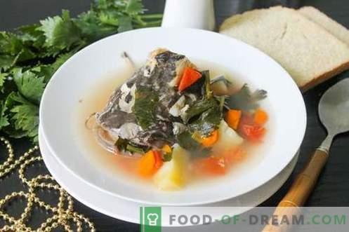 Zuppa Di Pesce Gatto Come Cucinarla Correttamente E Gustosa