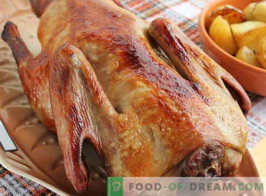 Anatra al forno - le migliori ricette. Come cucinare correttamente l'anatra in forno.
