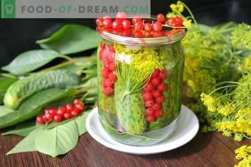 Cetrioli marinati con ribes rosso - tutti i colori dell'estate in una lattina
