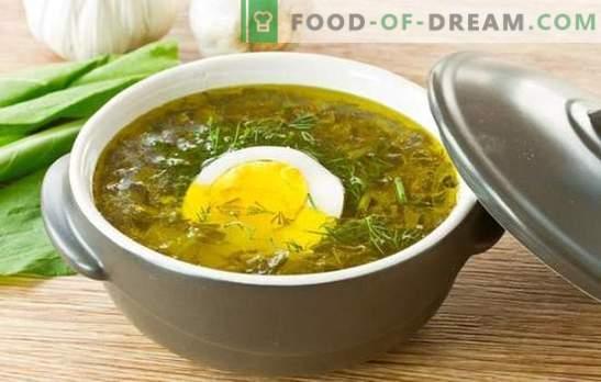 Zuppa di acetosa all'uovo: ricette passo per passo da calorose a dietetiche. Cucinare insieme zuppe di acetosa con uovo con riso, formaggio e farina d'avena