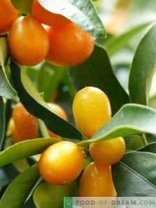 Kumquat: beneficio e danno
